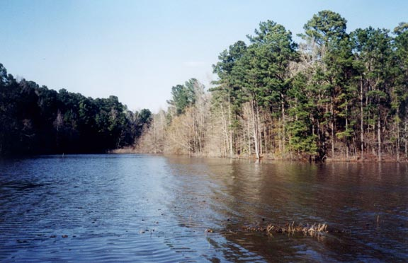 Indian Mounds Wilderness, TX: proposed for logging