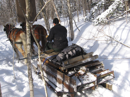 Horses aid restoration work in the Pemigewasset Wilderness, New Hampshire