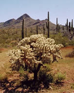 Kofa Wilderness