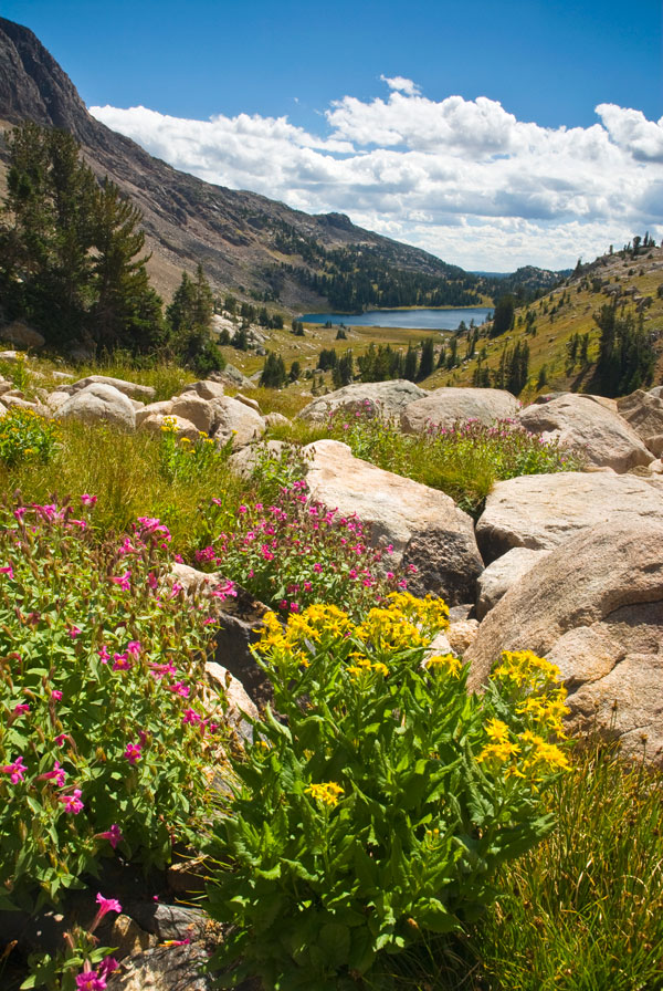Absaroka Beartooth Wilderness Jerome Walker